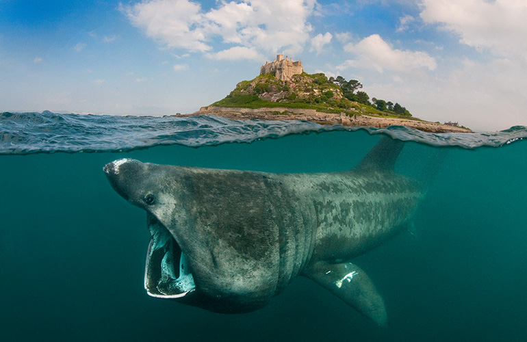 10 Tips To Take Amazing Underwater Photos